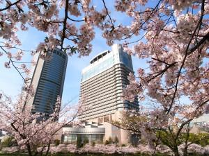 OAP 桜