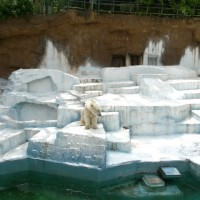 天王寺動物園のシロクマ