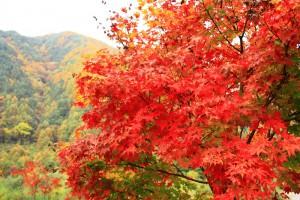 駒ヶ根高原の紅葉