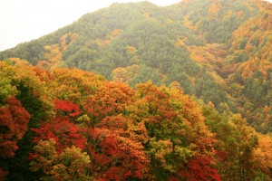 長野県 駒ヶ根高原