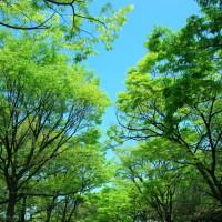 新緑の都島区