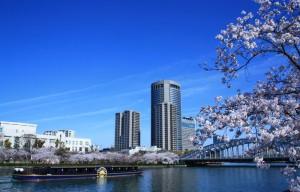 ひまわり桜クルーズ