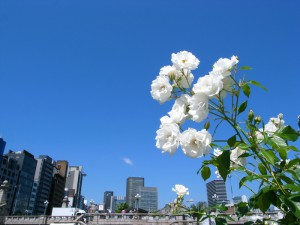 大阪 中之島