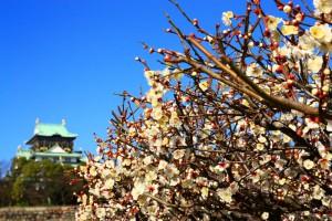 大阪城天守閣と梅の花