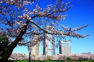 桜ノ宮の春