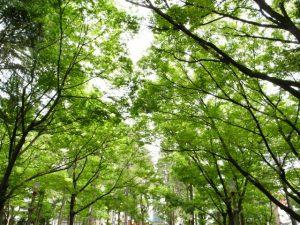 新緑の靱公園