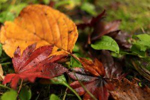 紅葉 落ち葉
