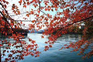 都島区の紅葉