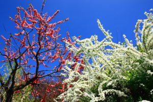春の藤田邸跡公園