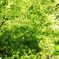 新緑 鶴見緑地
