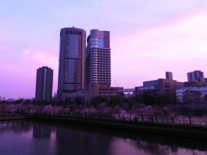 帝国ホテル大阪 桜写真