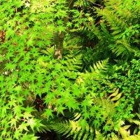 新緑の太閤園