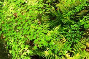 五月の新緑
